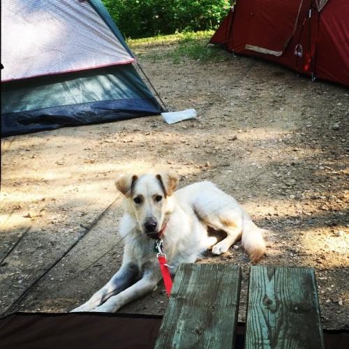 "Earl ""camping"""