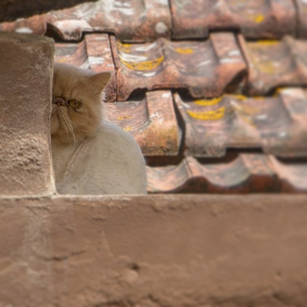 Pam took a photo of this elusive Portuguese Grumpy Cat, who would keep an eye on us from the rooftops.