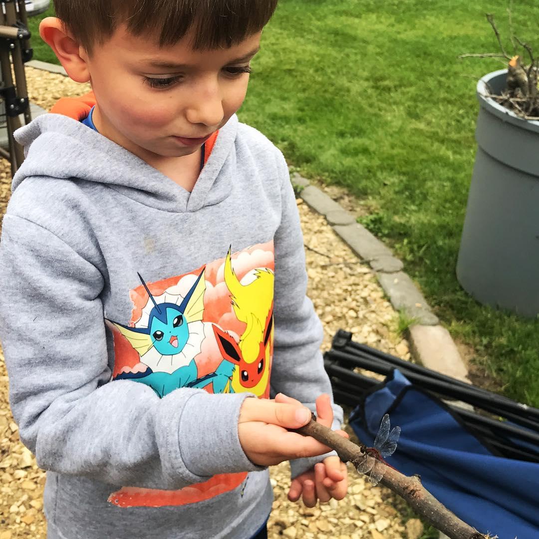 Maxi found a dragonfly.