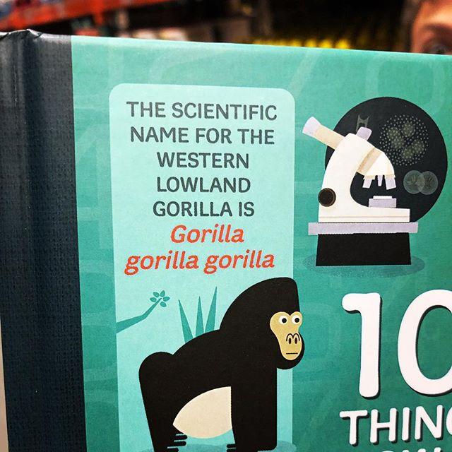 Gorilla 🦍 Gorilla 🦍Gorilla 🦍