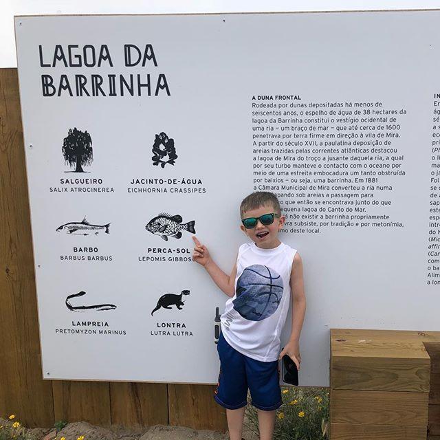 Lagoa da Barrinha