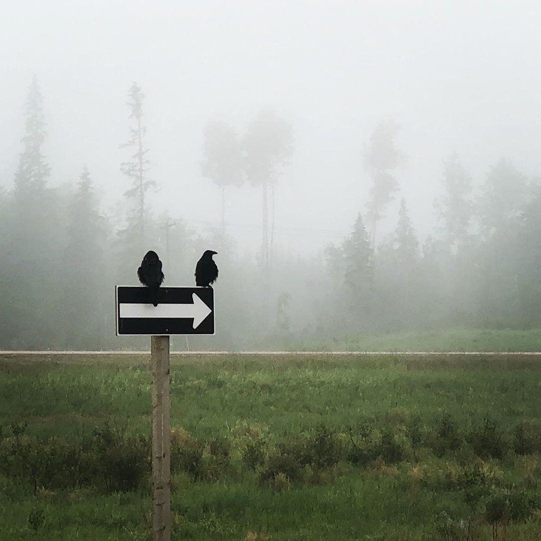 Foggy Highway 63