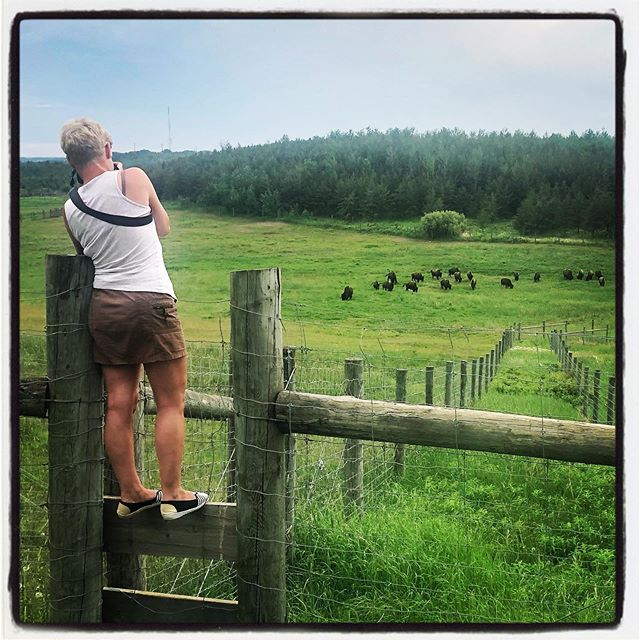 Pam photographing bison.