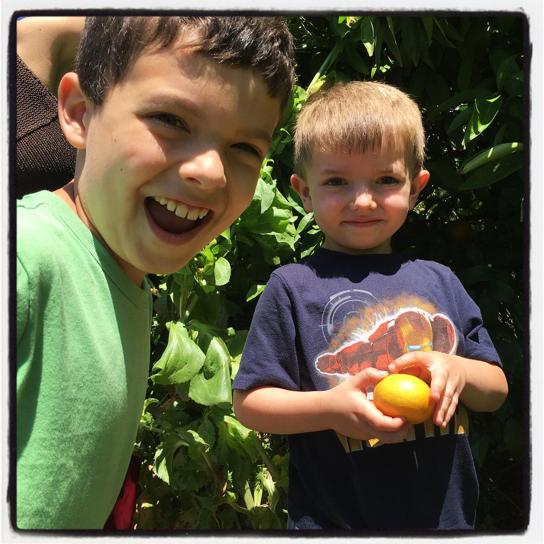 Yes, oranges grow on trees!